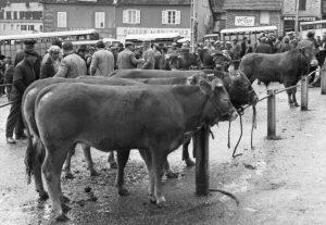 1er avril 1978 le champ de foire et le bétail